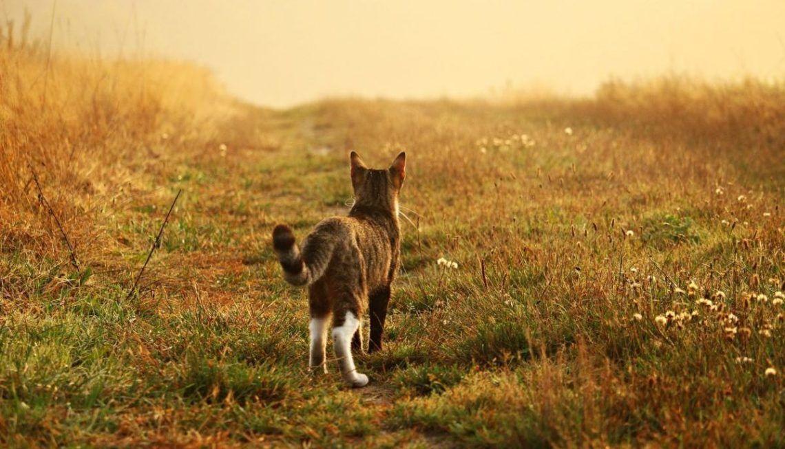 chat qui fugue