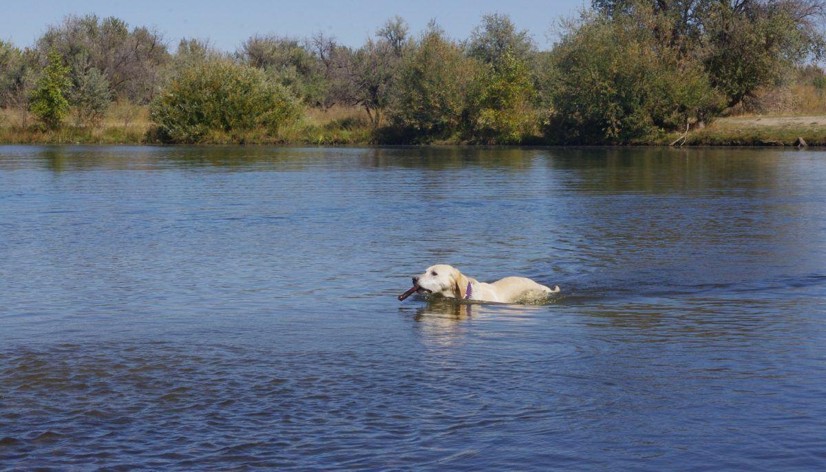 chien qui se baigne