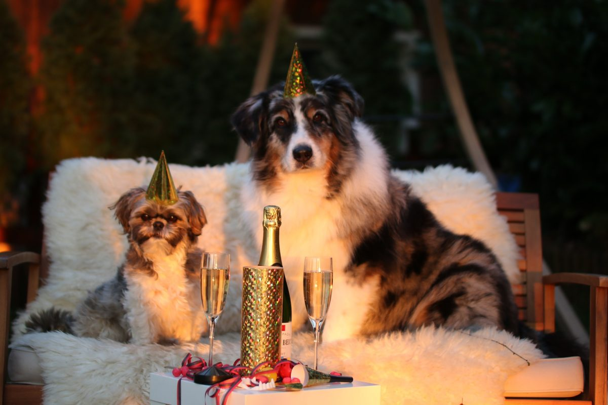 Nouvel-an-chien-1200x800.jpg